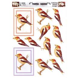 5050 Fugle
