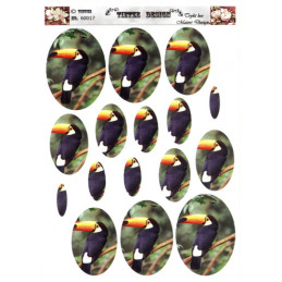 60017 Fugle